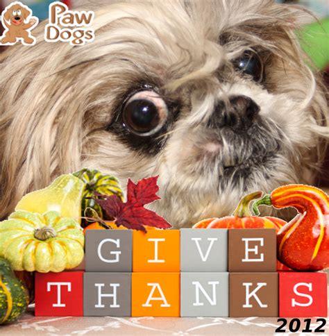 thanksgiving shih tzu thank you happy thanksgiving 2012 dolan shih tzu cooking gardening