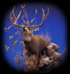 mule deer pedestal mounts mule deer pedestal mount pose 3 animal artistry