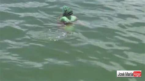 imagenes y videos reales de sirenas jos 233 mar 237 a algar sirenas reales encontradas vivas