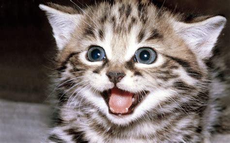 wallpaper kitty cat cute kitten wallpaper kittens wallpaper 16094681 fanpop