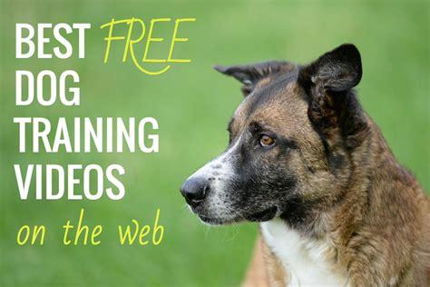 free puppy classes best free k9 of mine