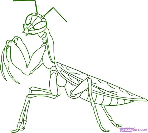 mantis crane parts information about praying mantis in