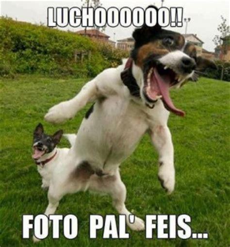 imagenes graciosas de cumpleaños de perros download imagenes graciosas for android by karinadigital
