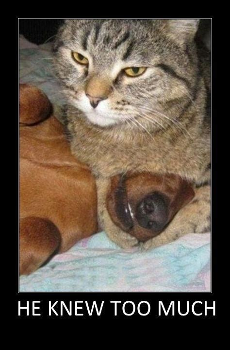 Funny Cat And Dog Memes - funny cats and dogs he knew too much jokes memes