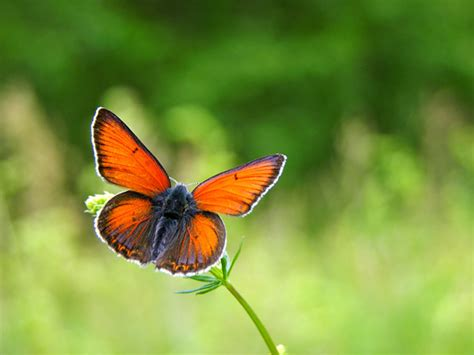 imagenes de mariposas naturaleza protecci 243 n de la naturaleza mariposas fotos foto