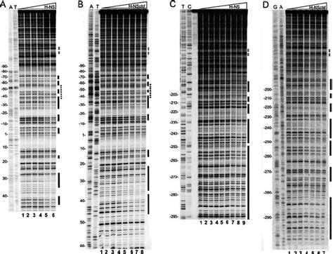 protein h ns dnase i footprinting of the virf promoter with h ns and h