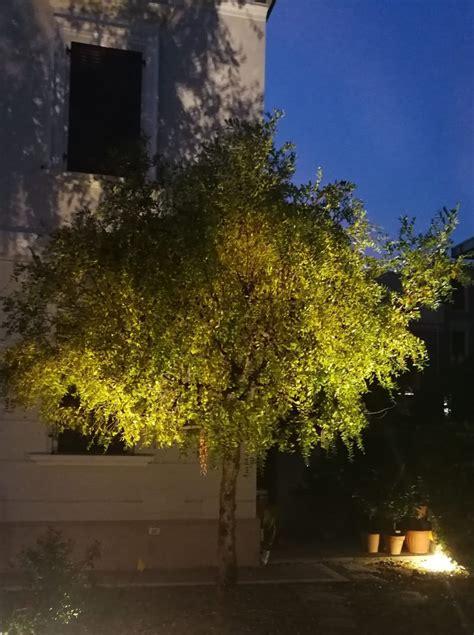 illuminazione alberi come usare al meglio i faretti per illuminazione alberi