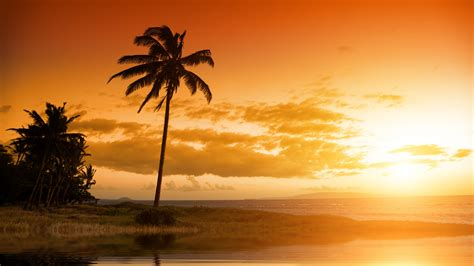 wallpaper sunset palm trees  nature
