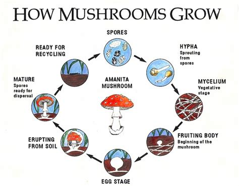how they grow north american mycological association