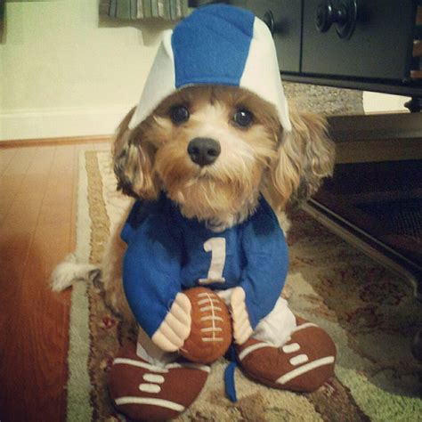 puppy football football costume flickr photo