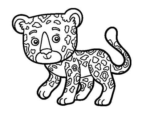 imagenes jaguar para colorear dibujo de guepardo joven para colorear dibujos net