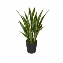 Topiary Ficus - mother in laws tongue 85cm artificial plants online