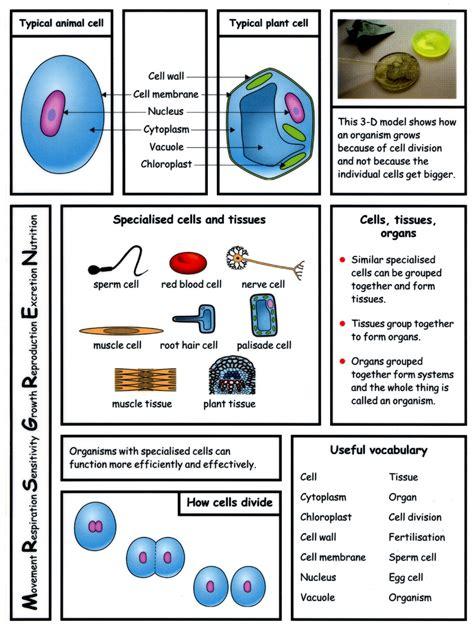 cells worksheet ks3 28 ks3 worksheets on cells ks3 year 7 science cells test links 4 science useful ks3 cells