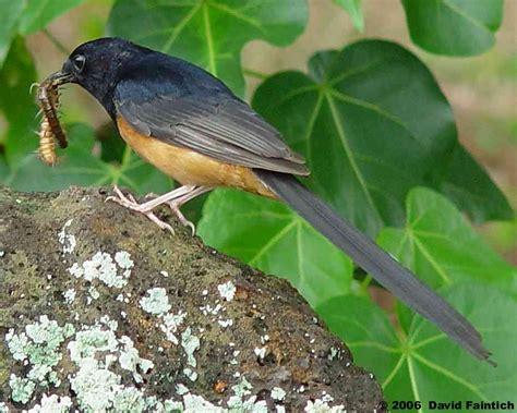 Pakan Branjangan Liar 13 fooding alternatif untuk burung kicauan om kicau