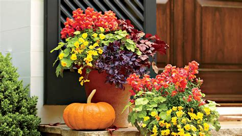 fall garden in louisiana plant a vibrant fall container southern living