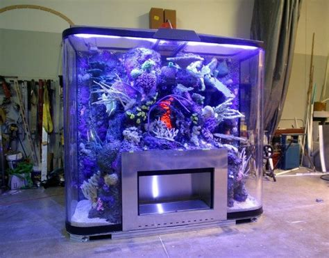 transform    home    fish tank