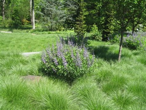 Prairie Lawn And Garden by Pin By Andria Widaman On Outdoor Plants