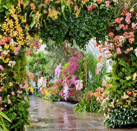 Orchid Show Bronx Botanical Garden 25 Best Orchid Show Ideas On Pinterest Orchid Show 2016 The Orchid And Blanc