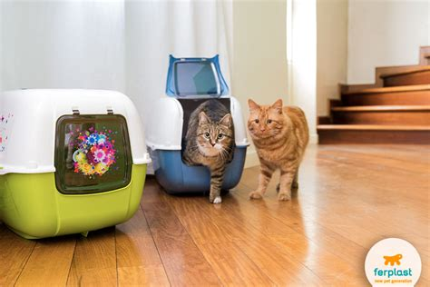 cat wont stop peeing on bed tips on how to make your cat stop peeing everywhere love ferplast