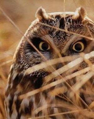 95 Best Owl Images On Animal - 407 best owls owlrly are a hoot images on