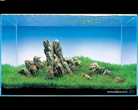 lade per acquario acqua dolce iwagumi lo zen e l arte dell acquario d acqua dolce con