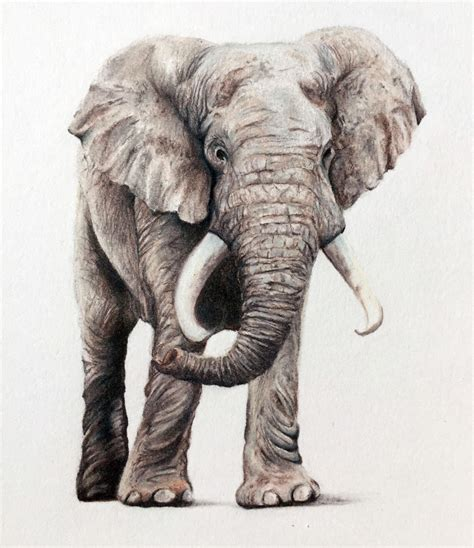 Color Of Elephants by Draw An Elephant With Colored Pencils