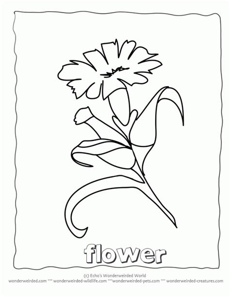 coloring page flower parts parts of a flower coloring page coloring home
