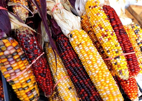 colorful corn colorful corn photograph by katy hawk
