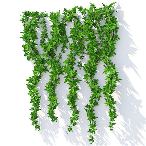 hanging plants wall hanging plant