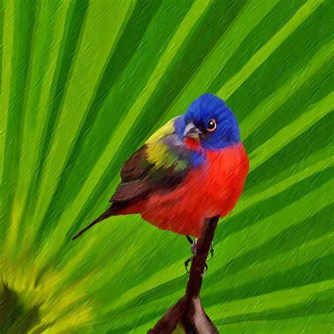 Material Pc bunter vogel bild kunst von geli bei kunstnet