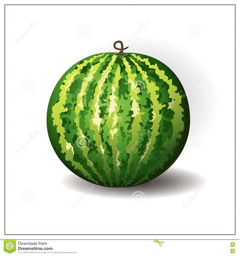 fruit rounds whole watermelon on the white background isolated