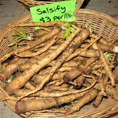 colored root vegetable 17 best images about fruits and vegetables on