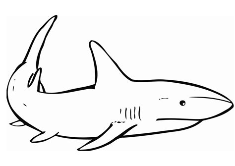 Shark Coloring Pages Printable free printable shark coloring pages for