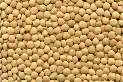 Yellow Lentils 100 Gr Murah pulse australia southern guide