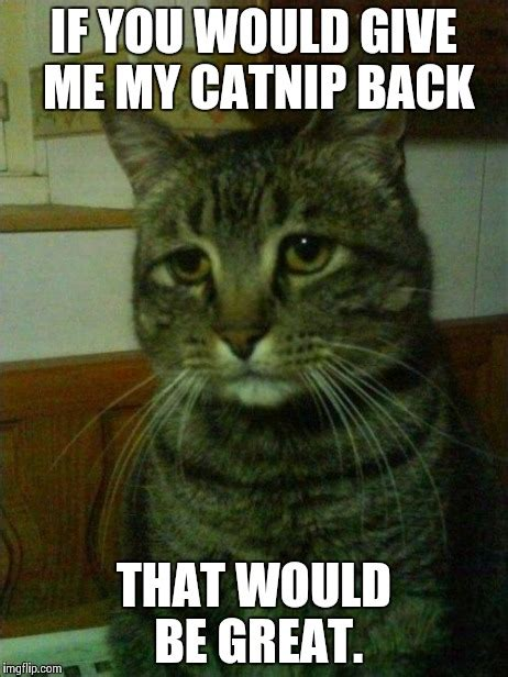 Depressed Cat Meme - depressed cat meme