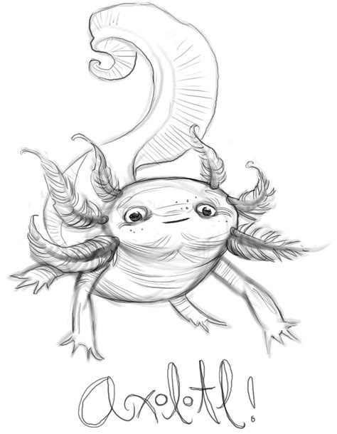 Axolotl Coloring Page by How To Draw Axolotl