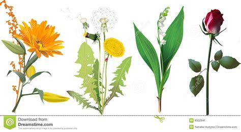 imagenes de flores individuales conjunto de flores imagen de archivo imagen 8352941