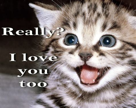 cutest kitten ever quotes