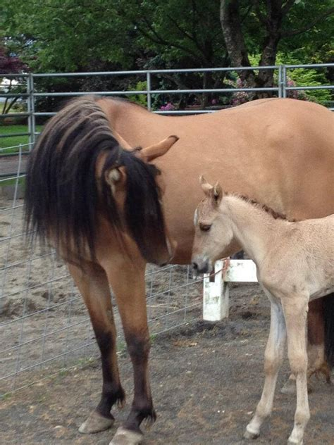 kiger mustang adoption 10 things you didn t about the kiger mustang