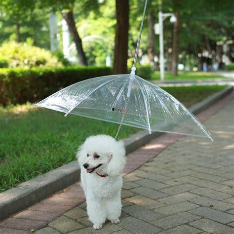 leash umbrella umbrella with leash changing products