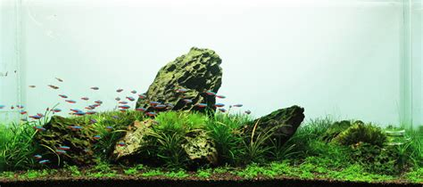 Aquascape Fish 草缸树林水草造景作品图片欣赏 草缸网