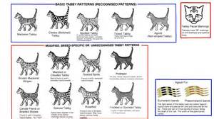 types of cat coloring tabby patterns and colors cats meow barkers