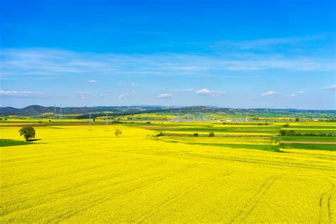 Landscape View Pictures Aerial View Rural Landscape With Blooming At The