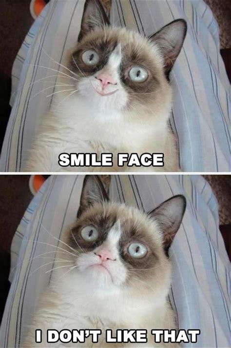 Grumpy Face Meme - grumpy cat smile face cats grumpy cat
