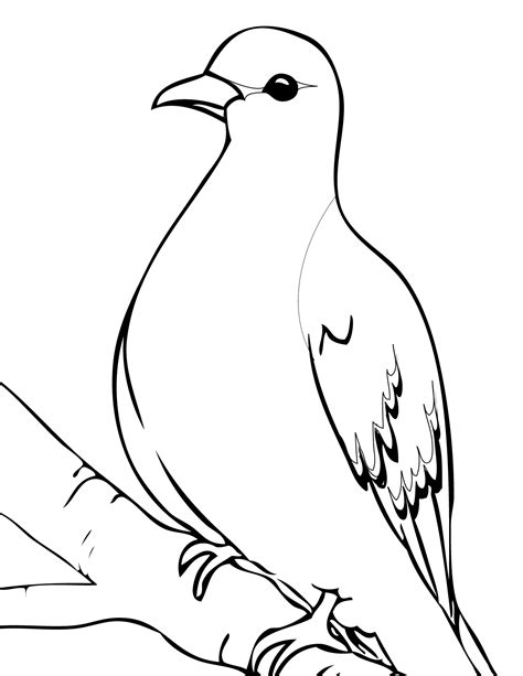 coloring page dove dove coloring pages 9503