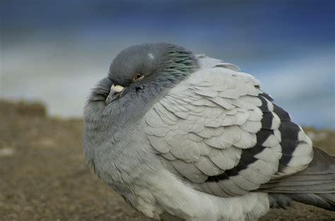 how do birds survive the coldest winters wonderopolis