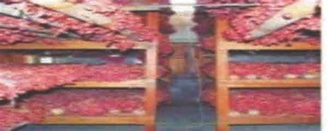 Jual Bibit Bawang Merah Brebes bawang merah brebes budidaya bawang merah