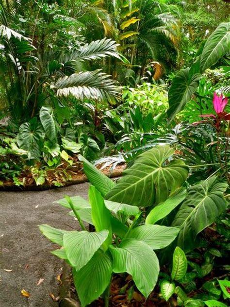 tropical patio plants february open garden abc melbourne australian