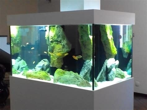 aquarium design video african cichlids aquarium adn aquarium design