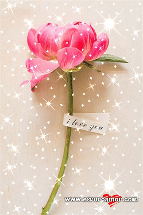imagenes de flores brillantes rosas imagenes brillantes